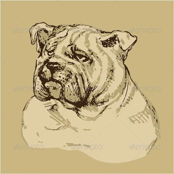 Hand Drawn Vintage Bulldog Head          Bulldog head – hand drawn -sketch in vintage style. This image is a vector illustration and can be scaled to any size without loss of resolution. All parts of the image are editable. EPS file included.     Created: 19October13 GraphicsFilesIncluded: VectorEPS Layered: No MinimumAdobeCSVersion: CS Tags: animal