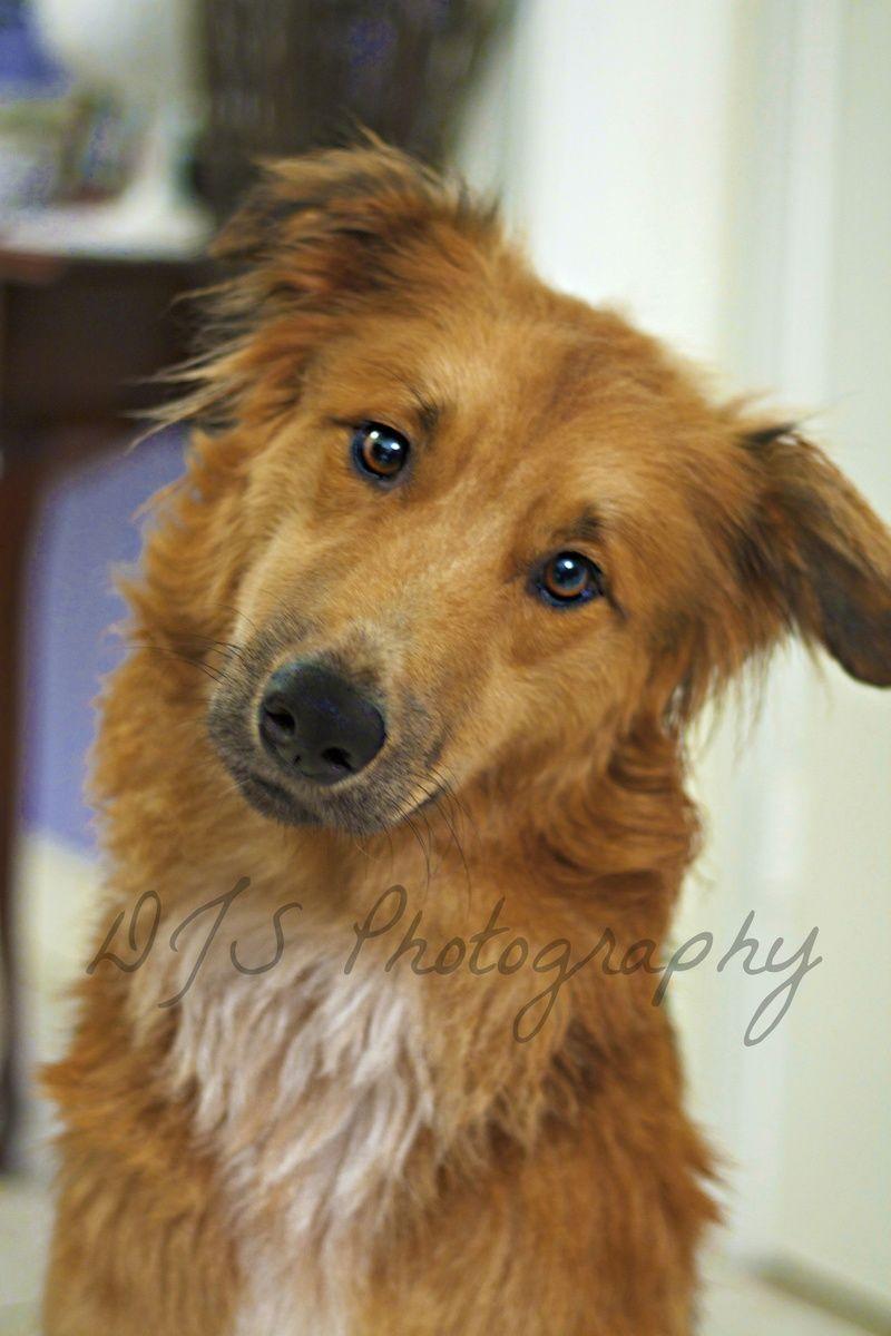 Adopt KANE on Cute dogs, Dogs, Cute animal drawings
