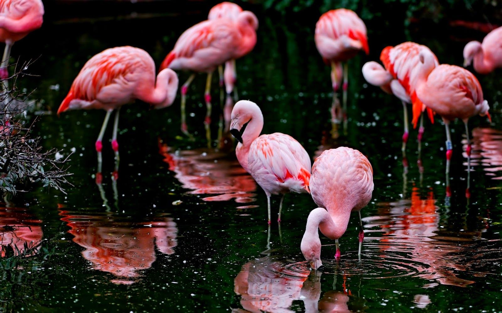 Background flamingo flamingos iphone wallpaper wallpaper - Explore Flamingo Wallpaper Hd Wallpaper And More