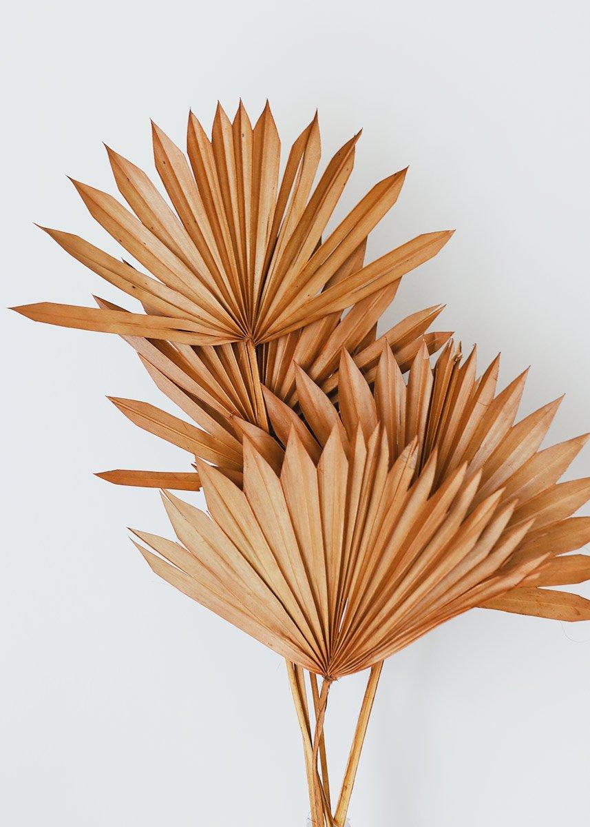 Pack Of 5 Terracotta Orange Sun Palms Leaf Decor Dried Flowers Palm Leaves