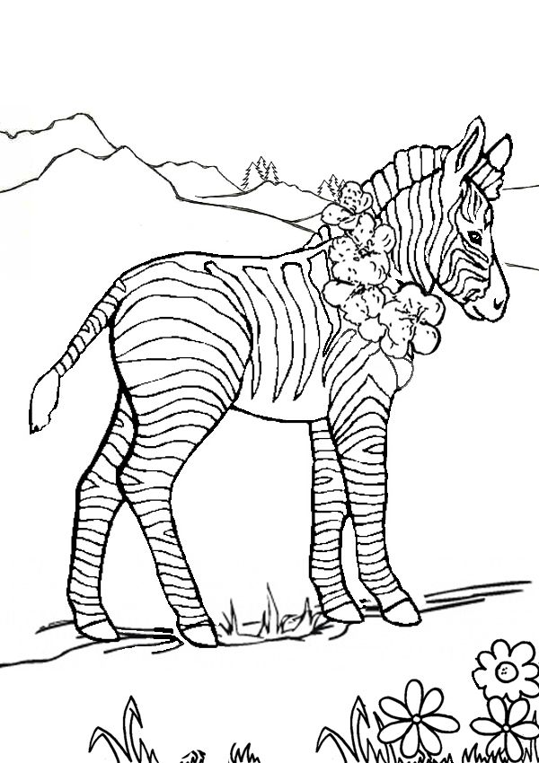 Free Online Zebra Colouring Page Kids Activity Sheets Animal