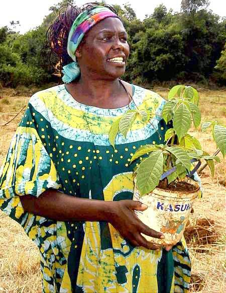 Wangari Maathai Quotes Google Search Colection 2 Mujeres