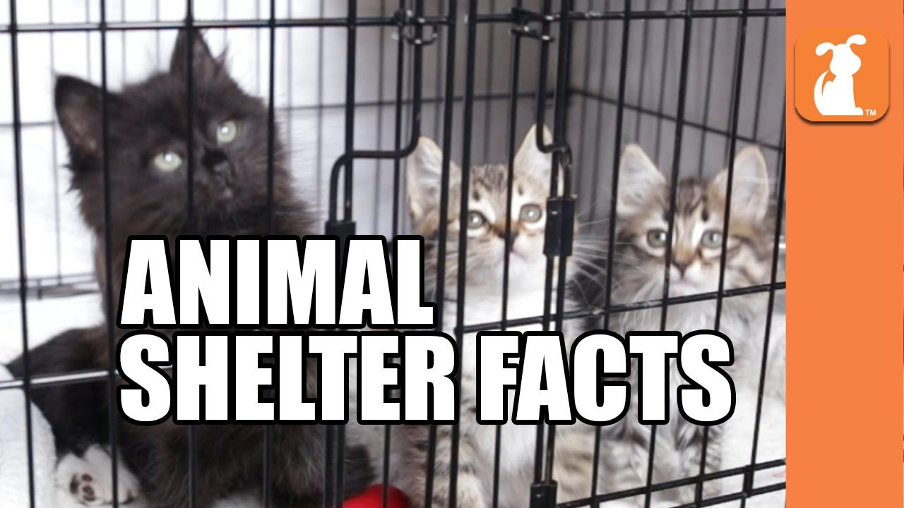 Animal Shelters Near Me Top Animal Shelters In The United States 2019 Animal Shelter Animal Shelters Near Me Animal Facts