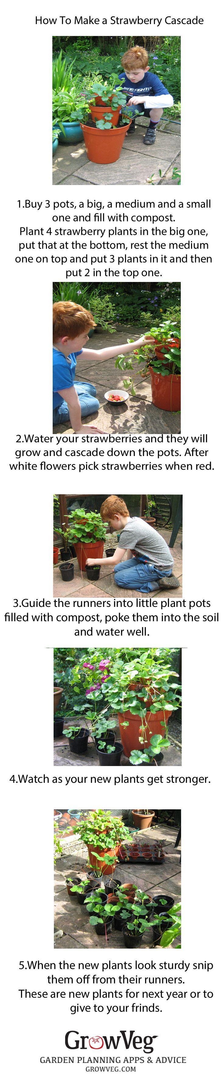 how to make a strawberry pot