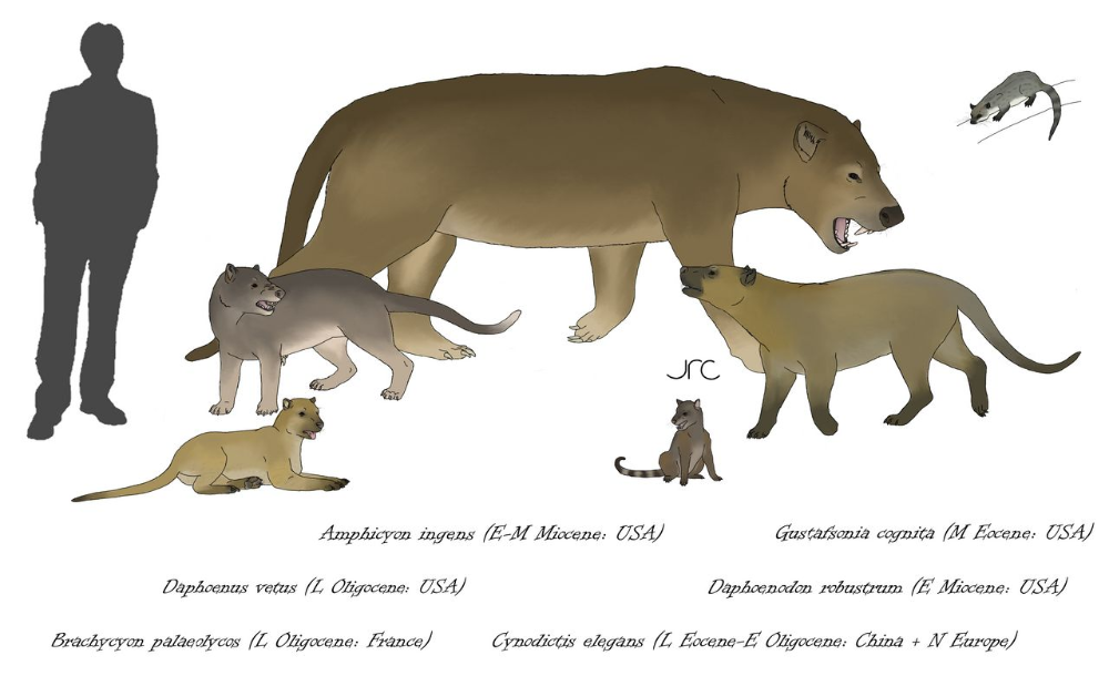 Not Bears Nor Dogs Amphicyonids By Artbyjrc On Deviantart In 2020 Prehistoric Animals Bear Dog Animals