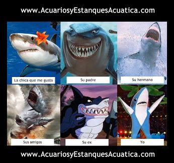 Acuatica Acuarios Y Estanques Google Tiburones Divertidos Imagenes Divertidas Memes Divertidos