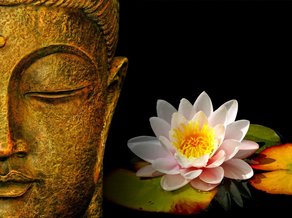 Buddha Face With Lotus Flower Hd Wallpaperclick The Link Now To Find