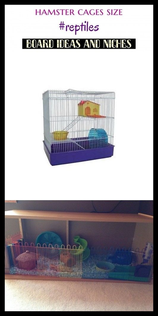 Hamster cages size reptiles keywords niches seo