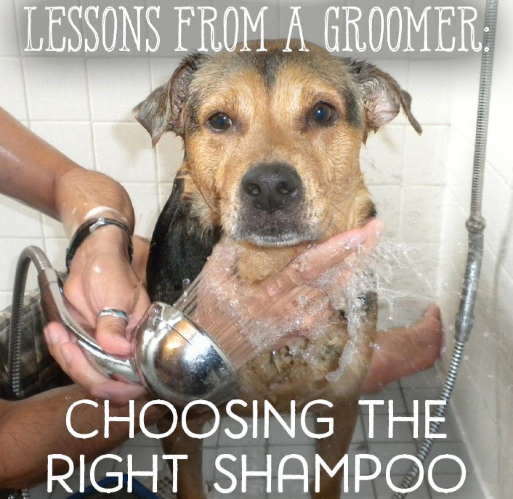 How To Choose The Best Dog Shampoo For Fleas Dandruff More