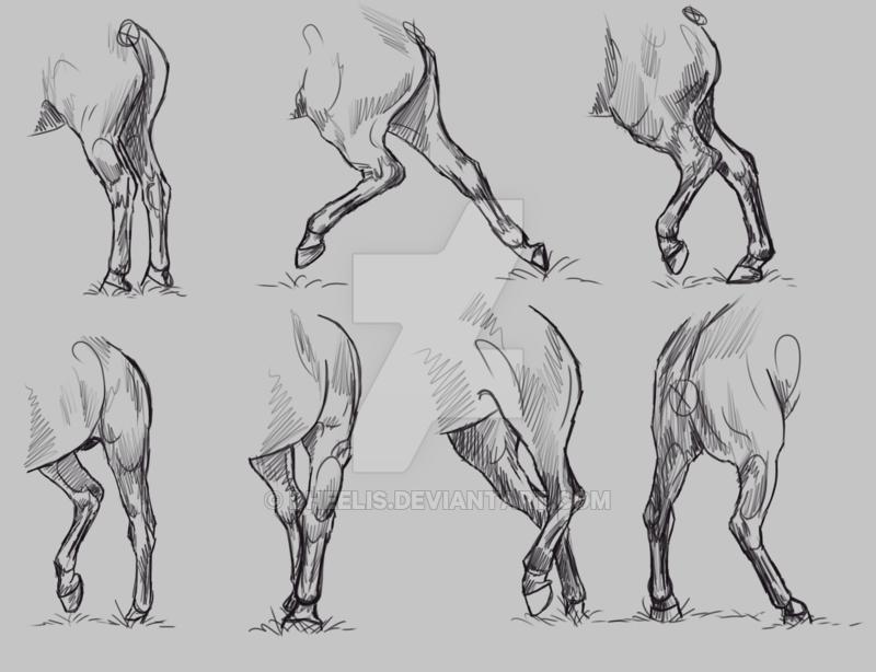 Study Horse Hindlegs By Dheelis Art Pinterest Horse Leg