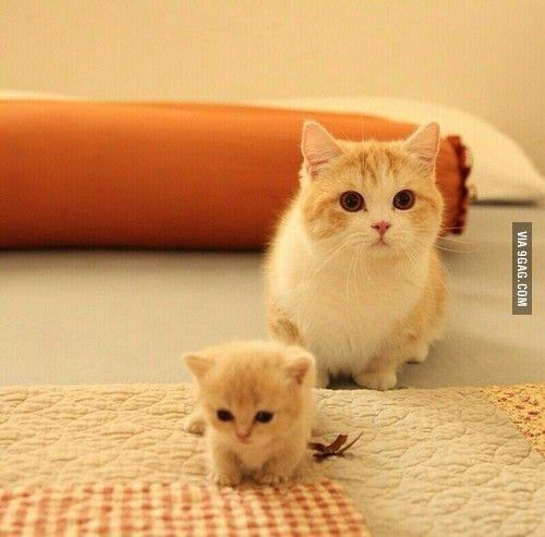 Mama Cat And Tiny Baby Kitten Kittens Cutest Cute Baby Animals Cute Animals
