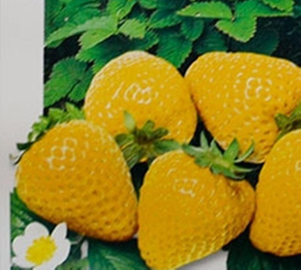 Yellow Strawberries