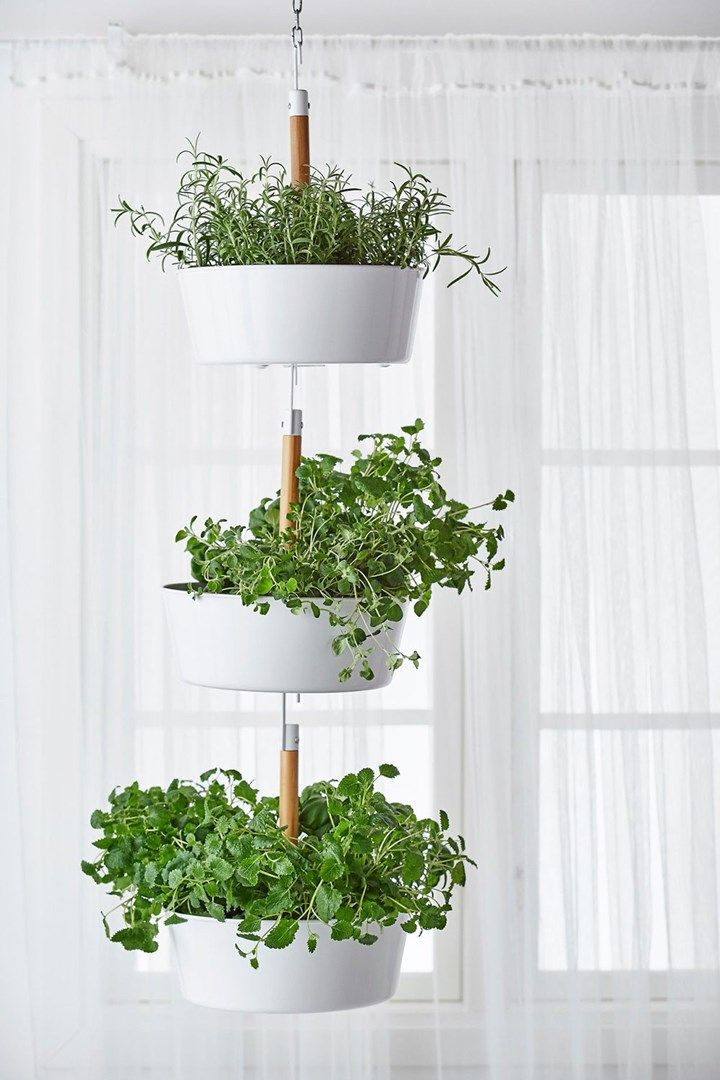 Start your own windowsill herb garden Hanging plants