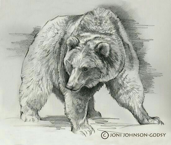 Pin by Susan Carrell on Bear Sketches in 2019 | Dessin ...  Pin by Susan Ca...