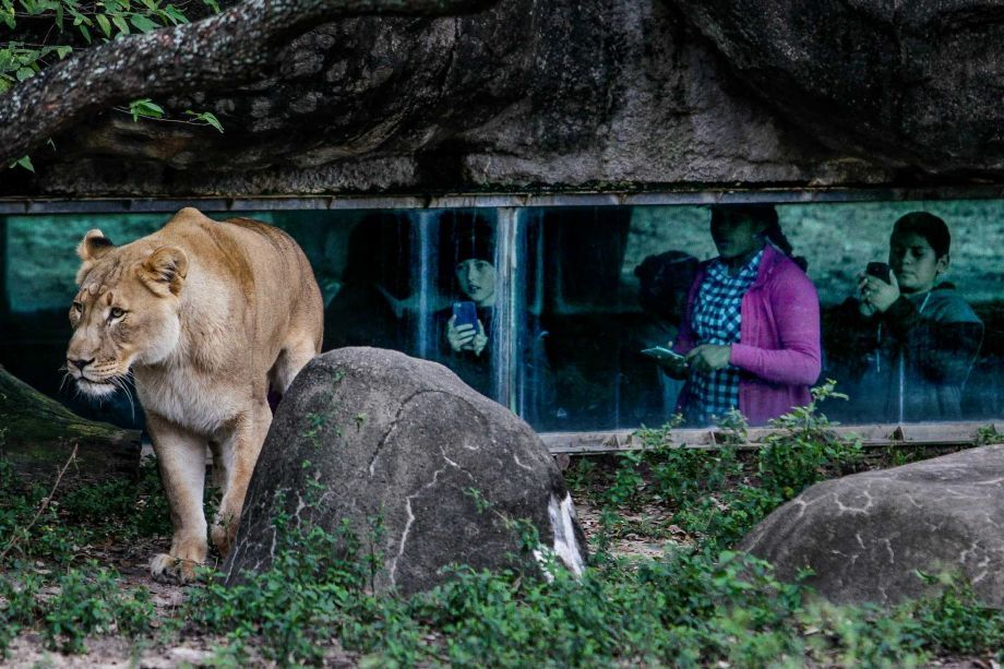 Houston Zoo Posts Record Attendance For 2015 Houston Zoo Zoo Architecture Zoo