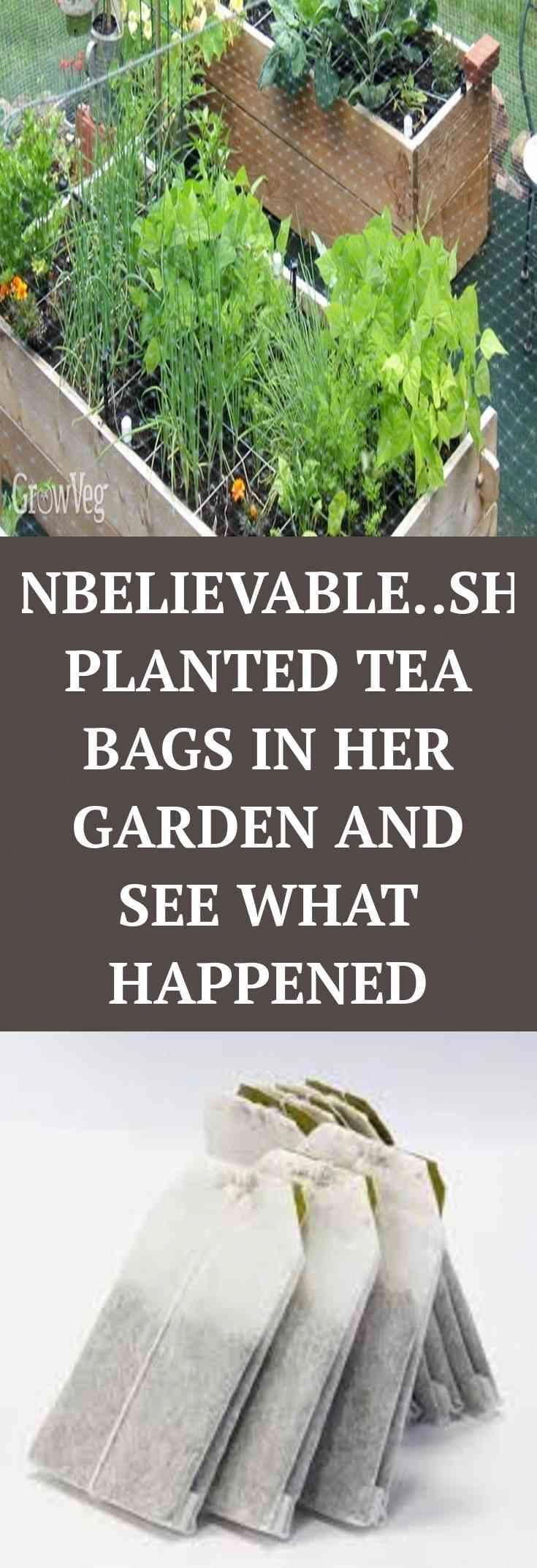 HAHA. Head to the webpage to read more on SHE PLANTED THESE TEA BAGS IN HER GARDEN This is how.  boo...