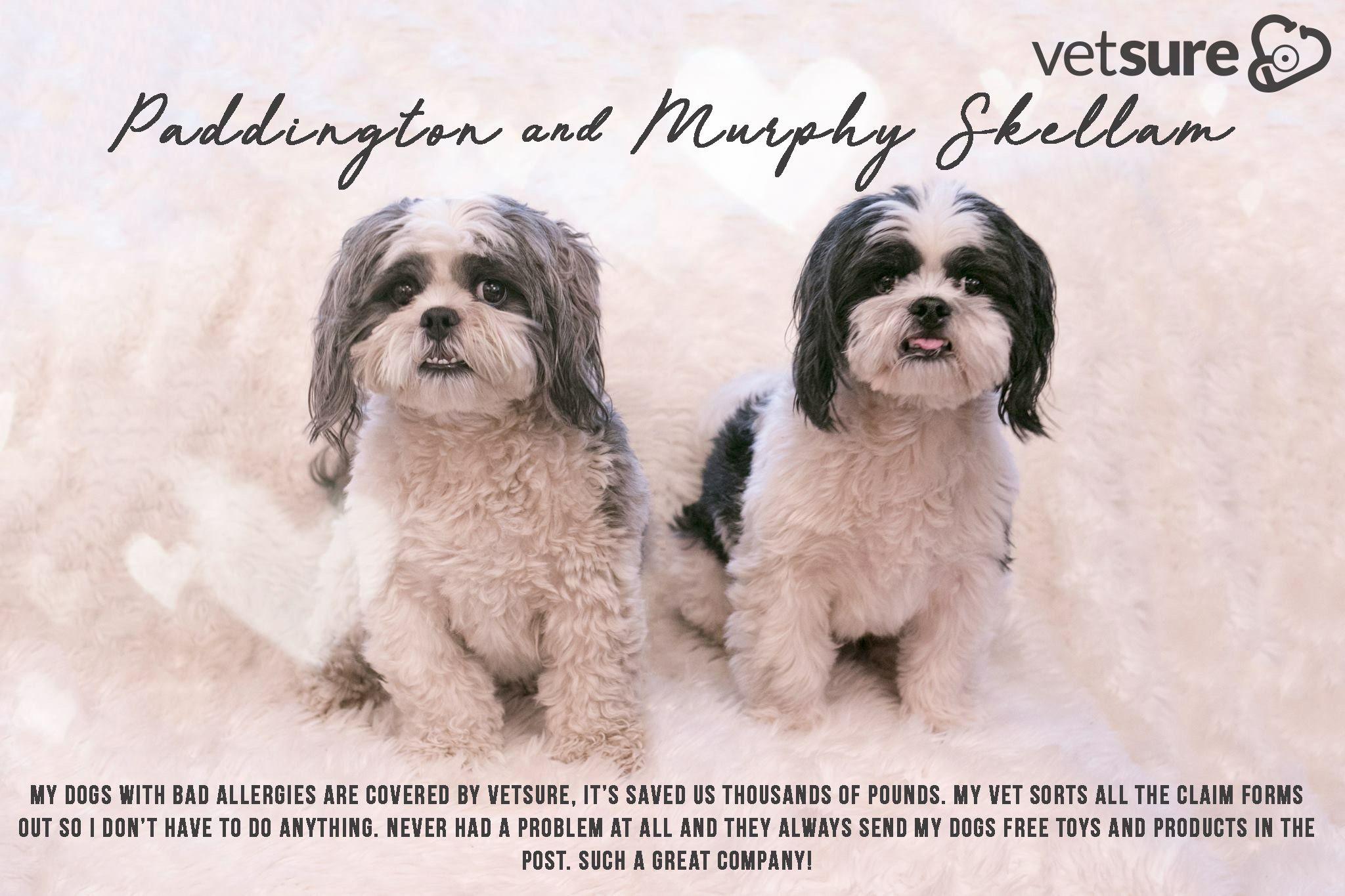 Paddington & Murphy Skellam Review Cat insurance, Dog