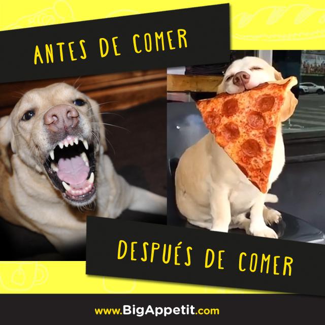 Antes De Comer Despues De Comer Perro Humor Bigappetit Meme Humor Memes Dogs