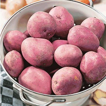 Kartoffeln Pflanzen, Pflegen, Ernten Garten Mit Kartoffeln Pflege Tipps