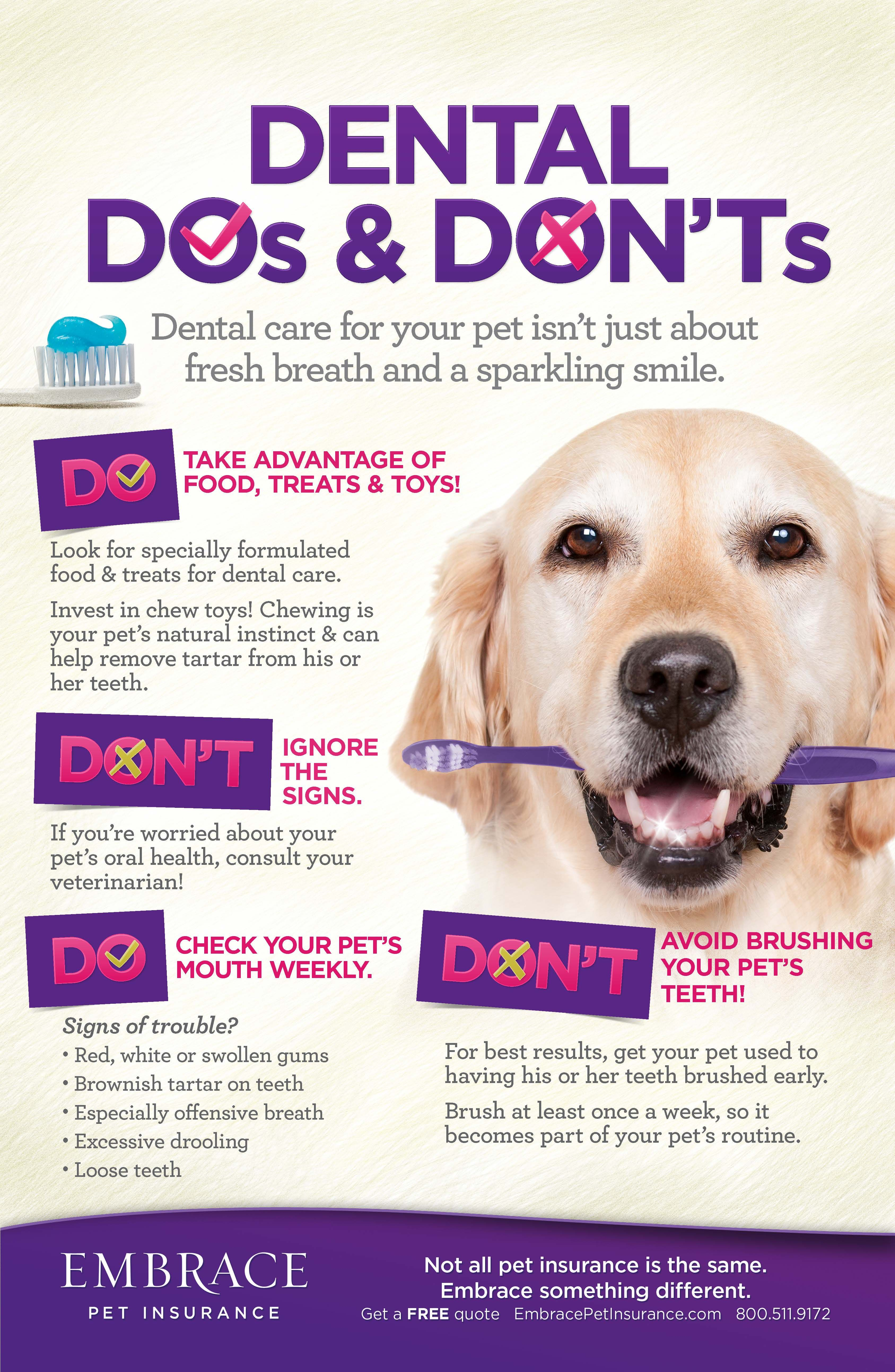 Being diligent about dental care can save you and your pet
