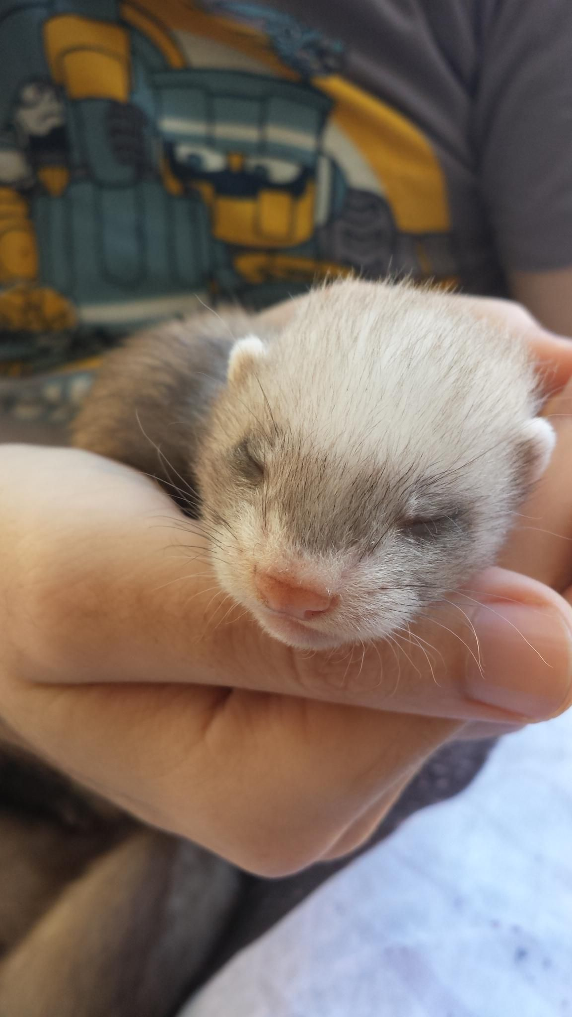 Some FAQs about ferrets