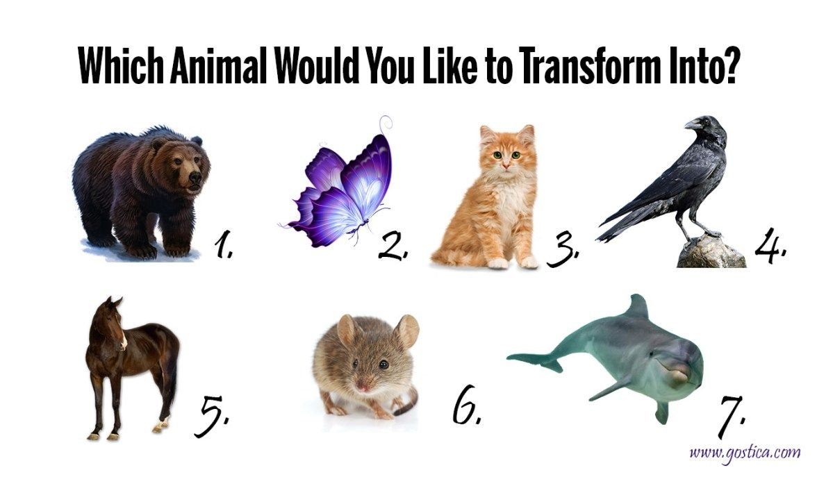 Shapeshift Quiz Wich Animal Would You Like To Transform Into