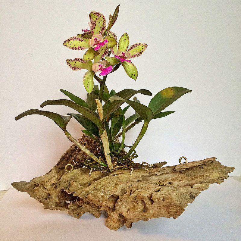 Flower Arrangement Using Driftwood: Cattleya Orchid, Driftwood And