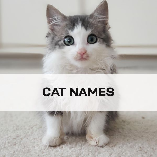 Pin By Cruelty Free Blog For Dog C On Popular Unique And Cute Cat Names Male Female In 2020 Cat Names Cute Cat Names Cute Cat