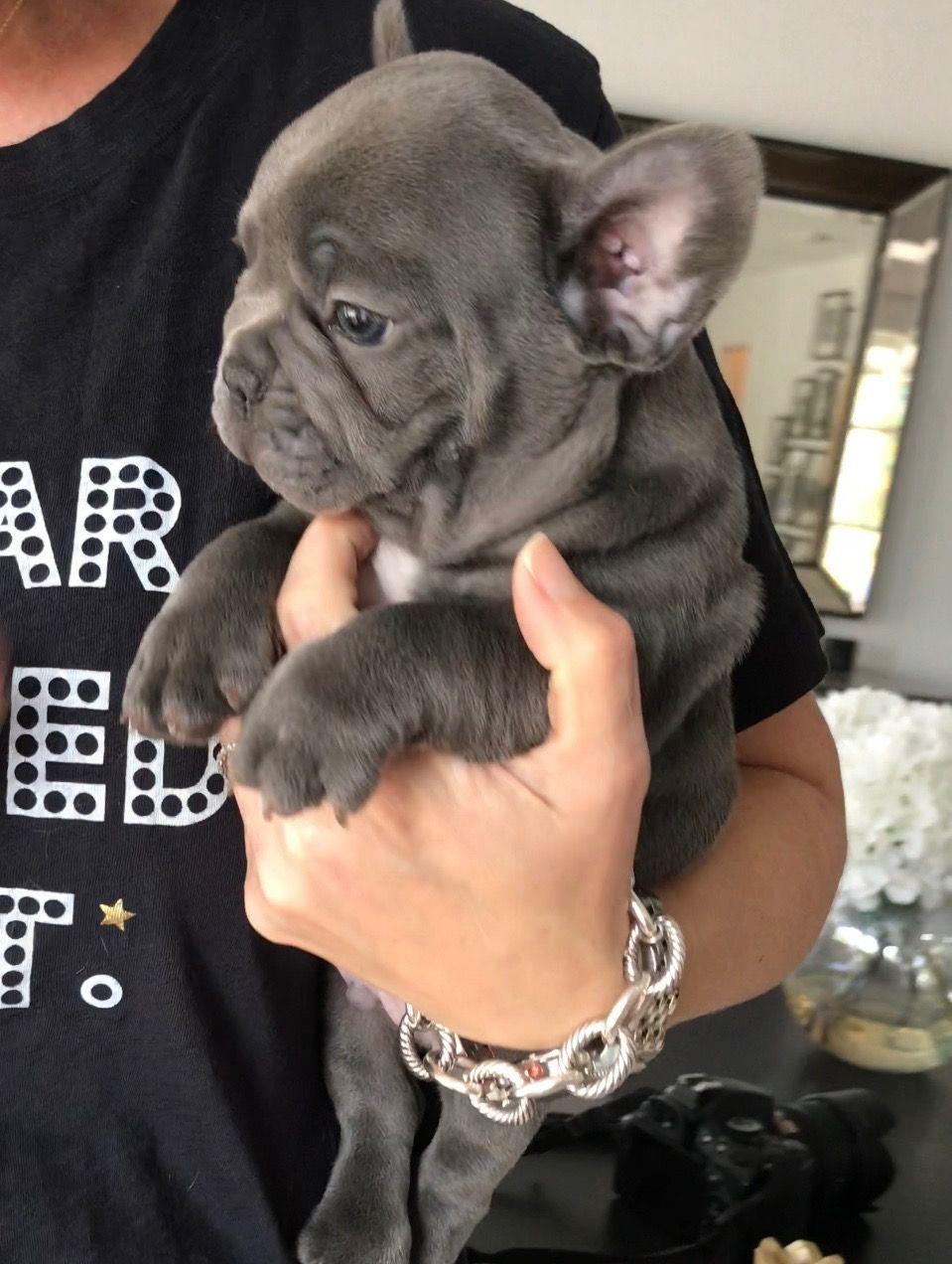 Piper S Puppy Rolls Www Poeticfrenchbulldogs Com
