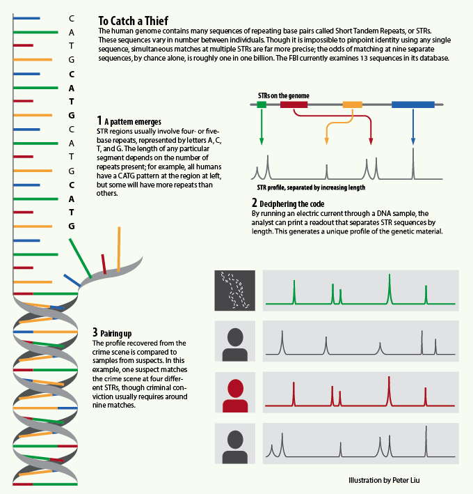 Dna Identification Infographic All Things Biology Pinterest