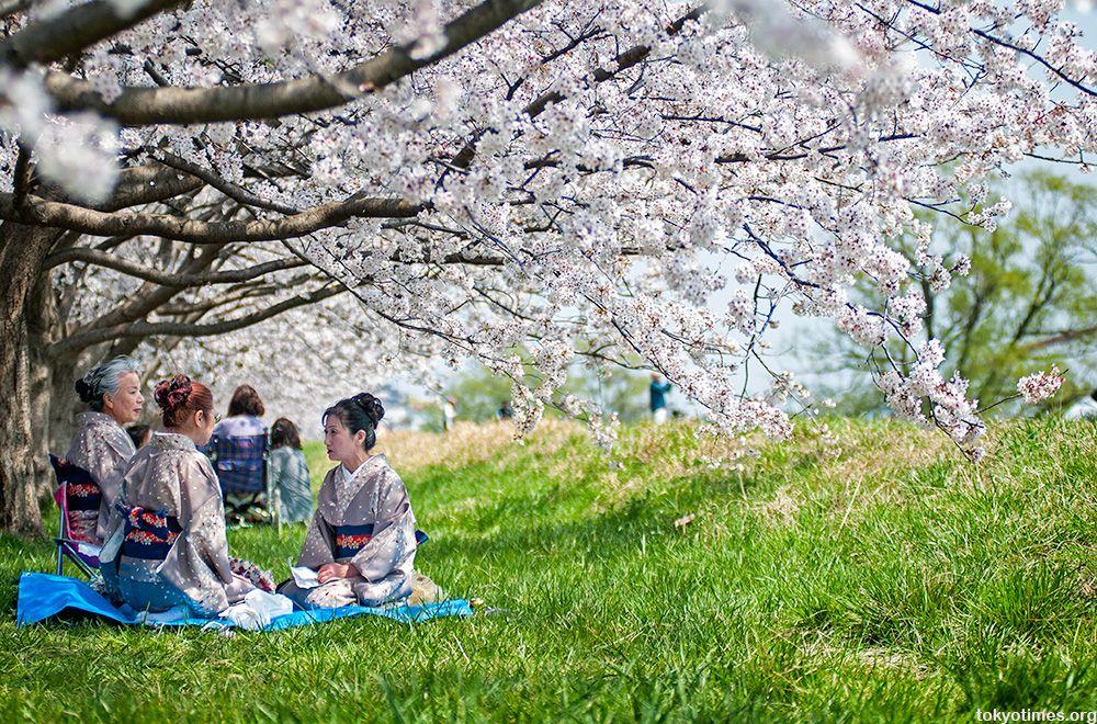 Matching Kimonos And Cherry Blossoms Japan Culture Hanami Japan