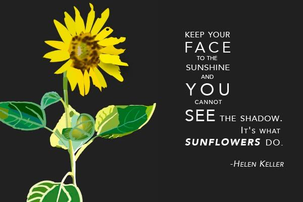Sunflower Sunshine Quote | Sunflowers, Inspirational quotes ...