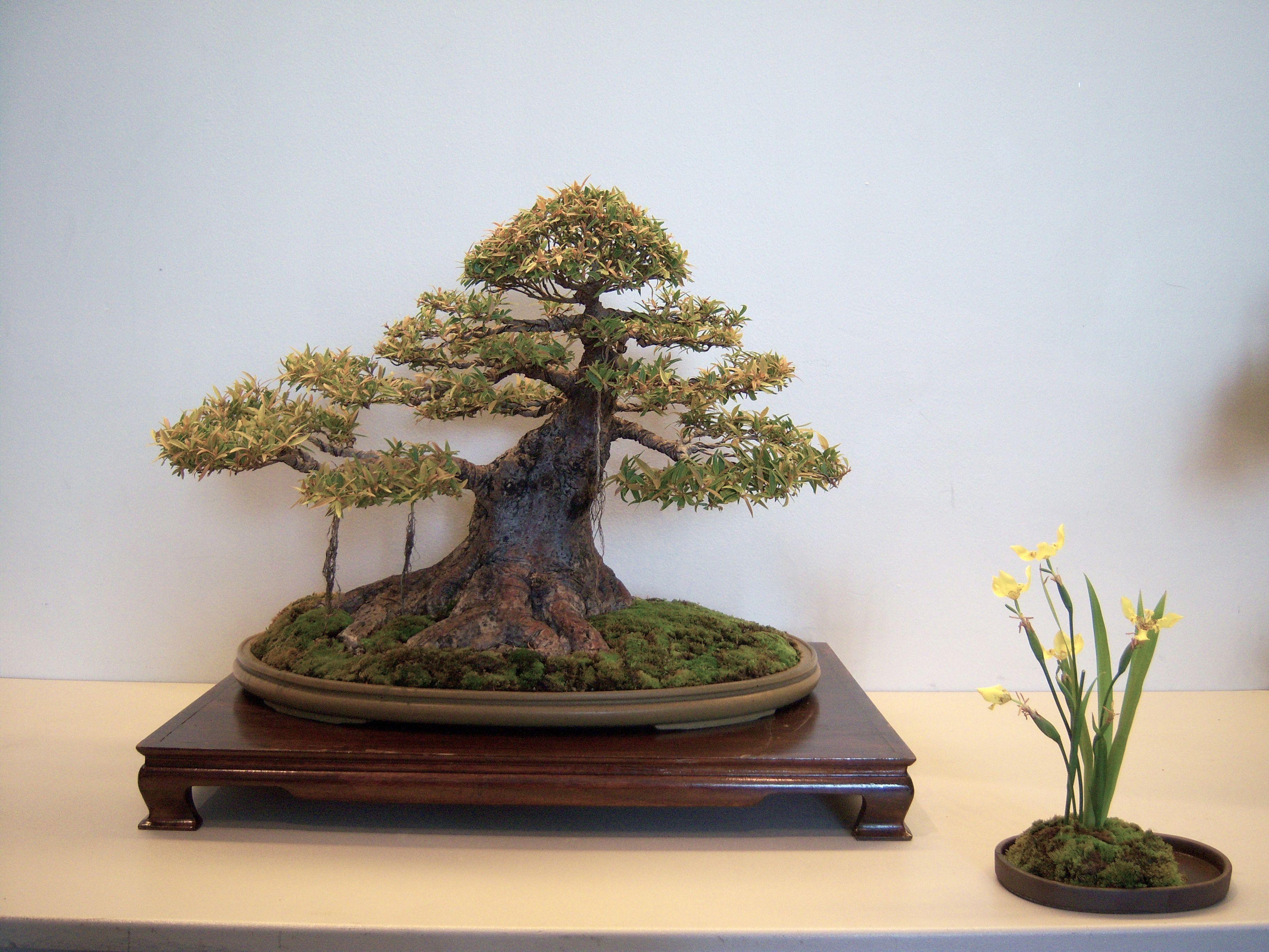 how to make a bonsai display stand