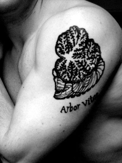 Arbor vitae: tree of life. The white matter of the cerebellum ...