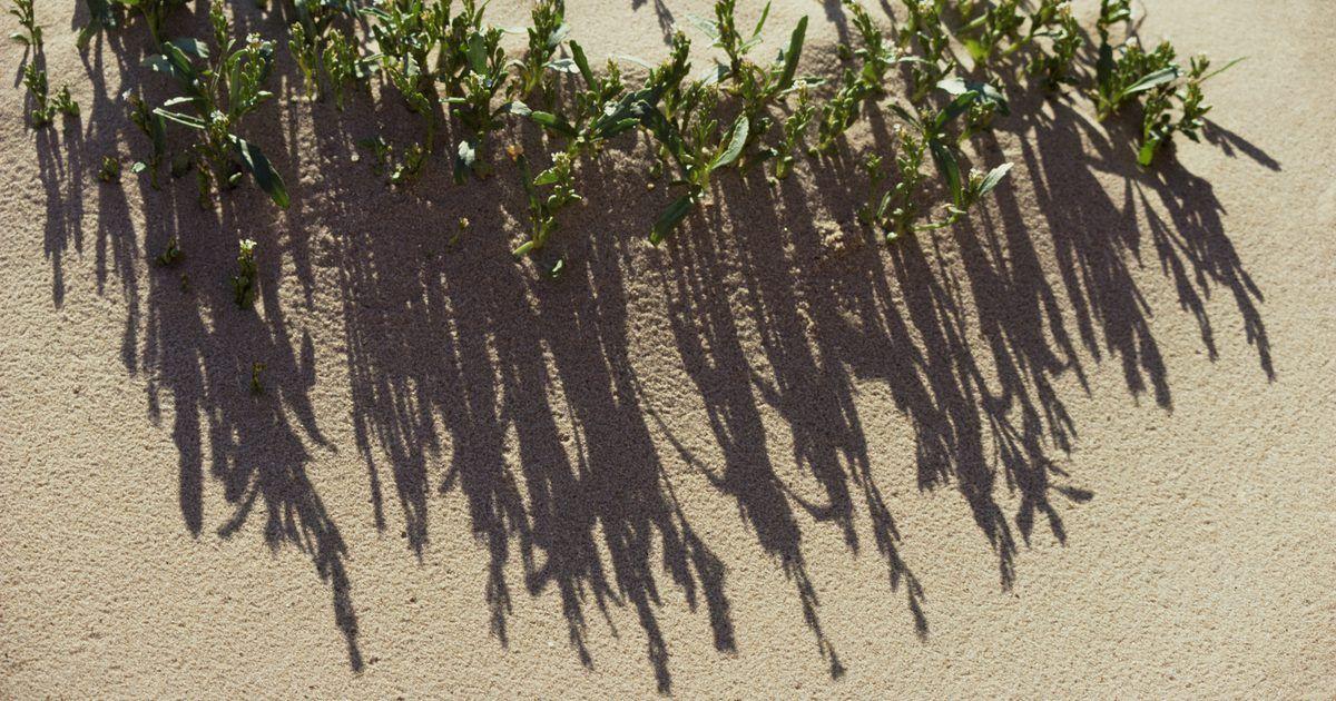 Animais e vegetações que vivem em dunas de areia. Dunas são acúmulos de areia soprados pelo vento e aparecem em todo o mundo. Normalmente, elas são encontradas no litoral, nas planícies de costa e em regiões desérticas. Apesar do areal ser soprado por vento seco, a baixa umidade e o sol intenso fazem desses locais um ambiente hostil, mas algumas espécies de plantas e animais se adaptaram a isso, ...