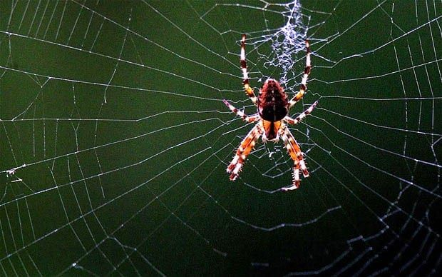 Uncover Of Spider Scientists DesignWebs Web Strength Oyvm80Nnw