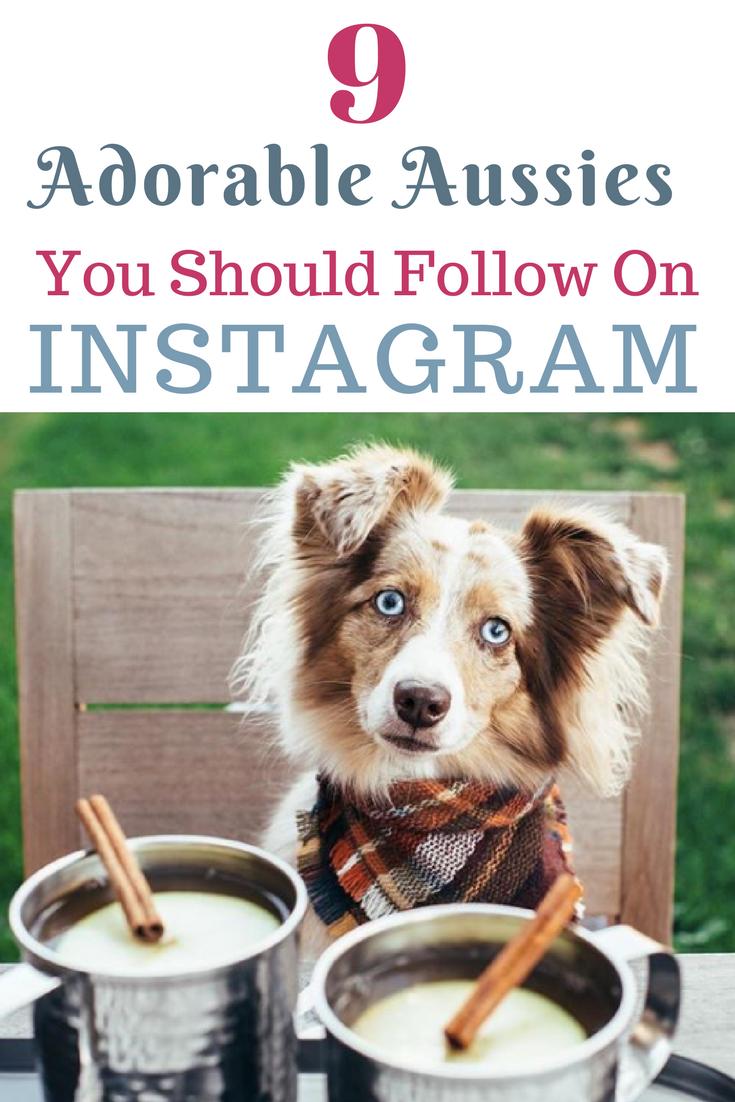 9 Aussies You Need To Start Following Today On Instagram Australian Shepherd Australian Shepherd Puppies Australian Shepherd Blue Merle