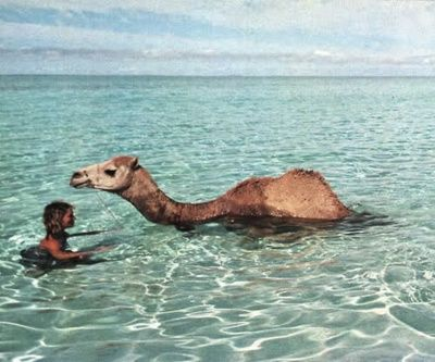camel water tumblr - Google Search