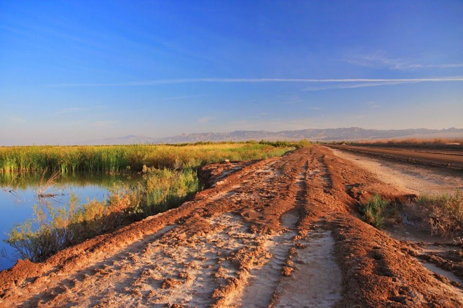 TRAVELS OF DISCOVERY 2013-2015: March 29 -- Birding the south end of the Salton Se...