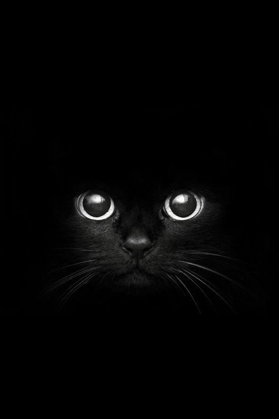 Chat Noir Sur Fond Noir Animaux Chat Chaton Et Felin