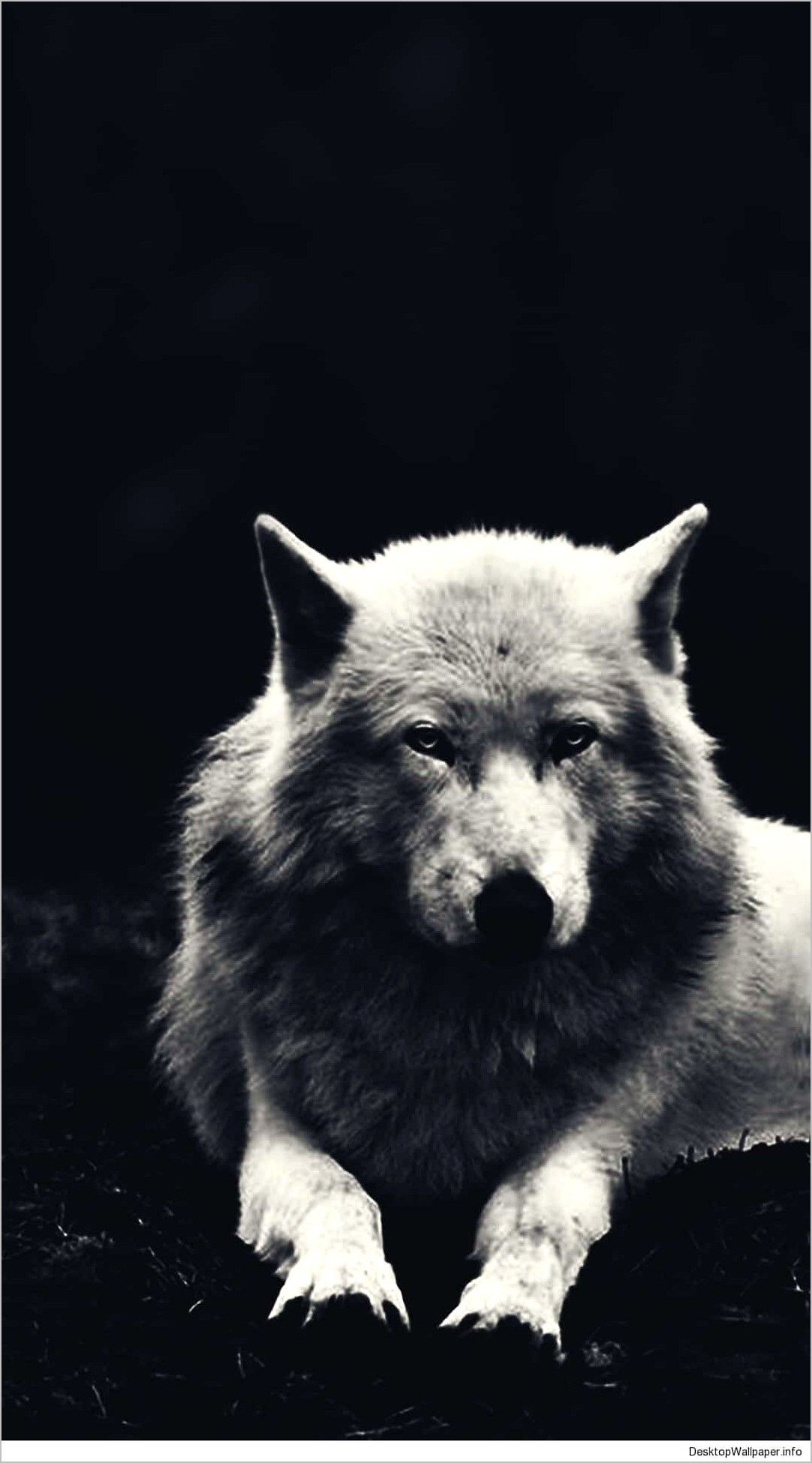 Alpha Wolf Wallpaper 4k In 2020 Wolf Wallpaper Animal Wallpaper Wolf Spirit Animal