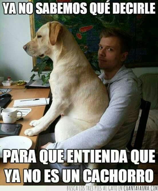 Pin By Ricardo Gonzalez On Memes Dumb Dogs Funny Dogs Dog Cat