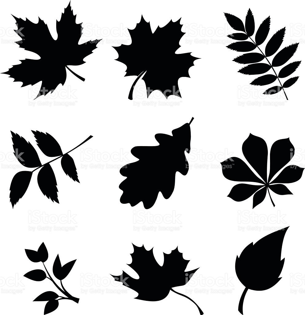 Set Of Leaves Vector Black Silhouettes Royalty Free Stock Vector Art Leaf Silhouette Leaf Stencil Leaves Vector