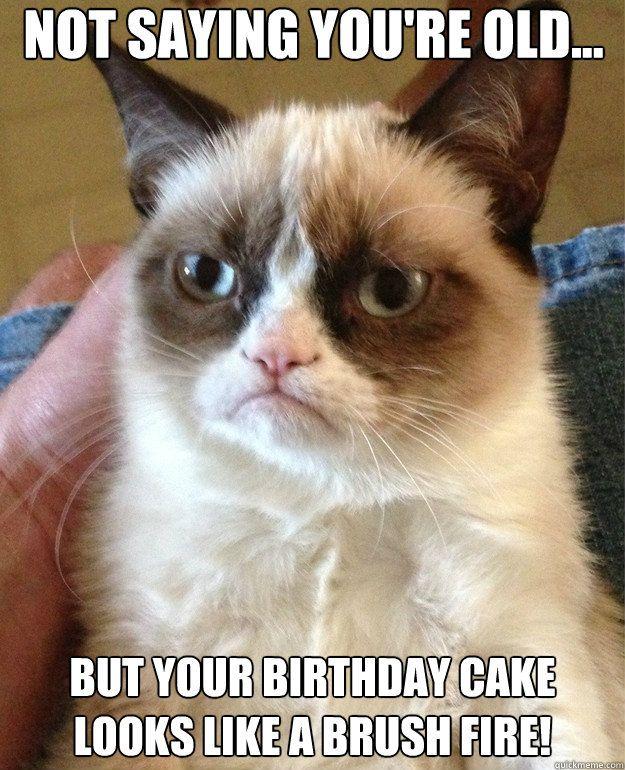 Funny Cat Humor Grumpy Cat Slip Into Something Comfortable