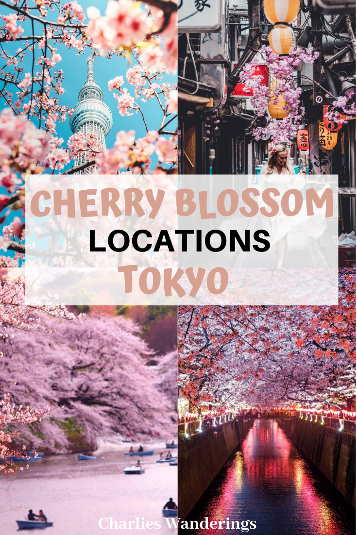 The Best Cherry Blossom Locations In Tokyo Charlies Wanderings Asia Travel Travel Destinations Asia Japan Travel Guide