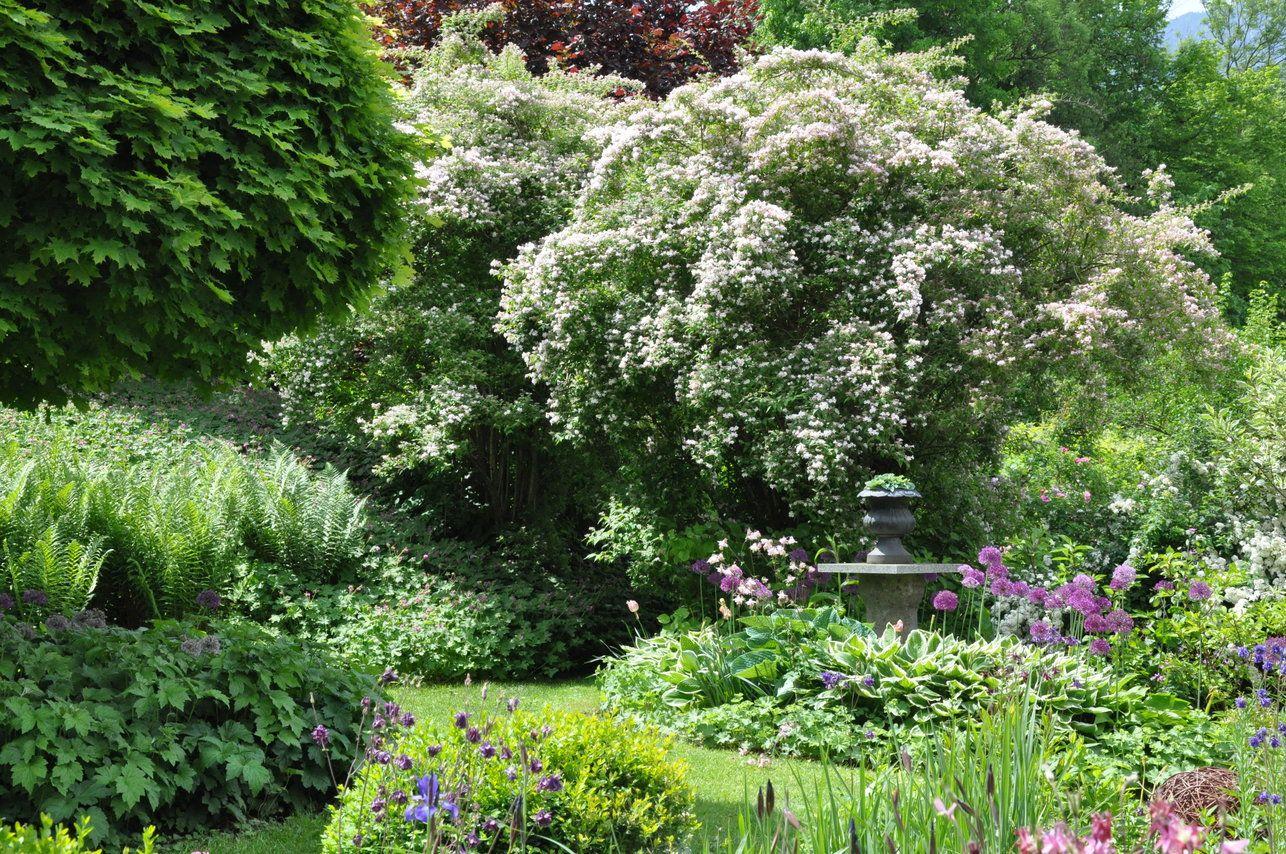 Bild 1 Aus Beitrag Naturnaher Garten Weniger Aufwand Mehr Genuss Und Eine Oase Fur Mensch Und Tier Naturnaher Garten Garten Pflanzen Garten