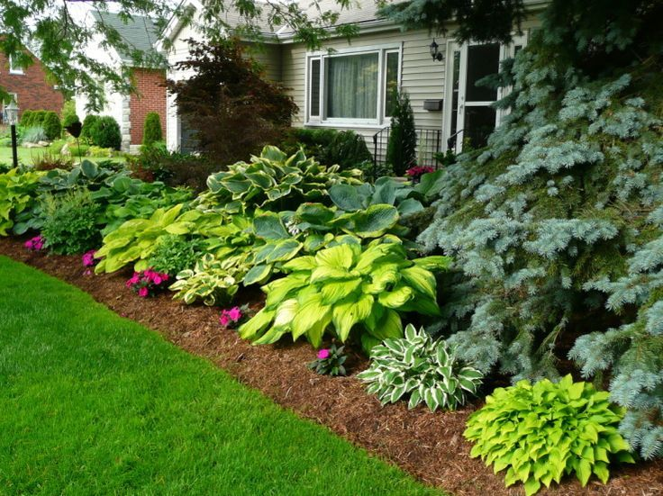 plant hostas tree fence
