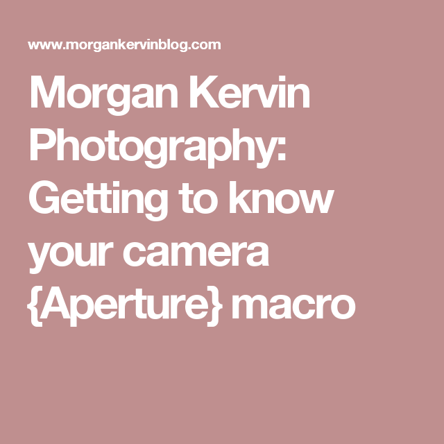 Morgan Kervin Photography: Getting to know your camera {Aperture} macro