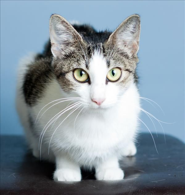 Hi There I M Molly I M A Sweet And Loving Kitty Kat Who Makes A Great Companion I D Love To Meet You Pop Into The Wacol Campu Cute Animals Animals Adoption