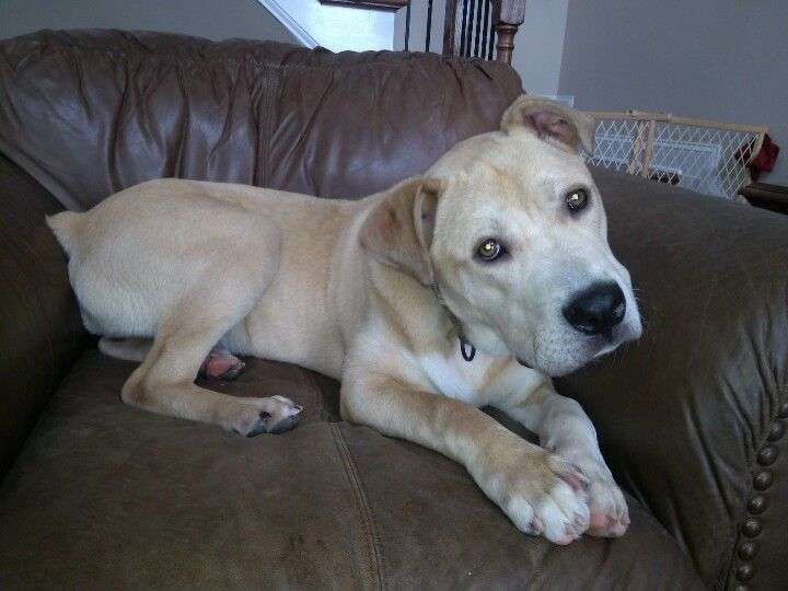"""Our new adopted baby """"Tundra"""". He saved us instead of us saving him. He's such a blessing!"""